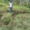 Gerakan Tanah di Desa Badak Uken