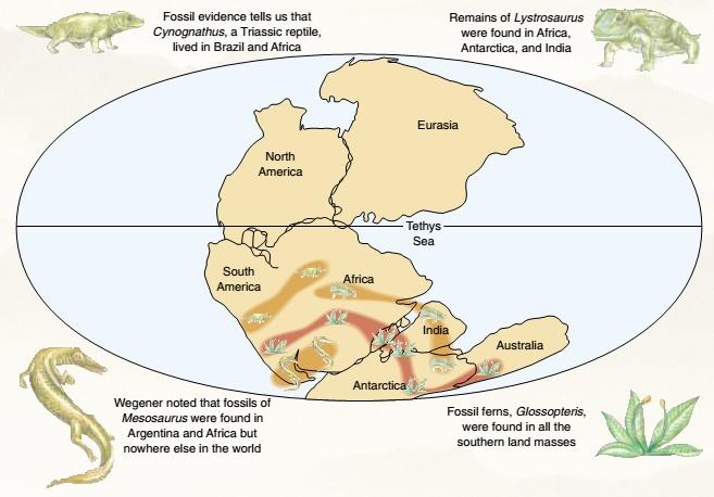 4 Bukti Menguatkan Teori Tektonik Lempeng