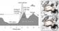 Longsor Anak Krakatau Yang Memicu Tsunami, Pernah Diprediksi?
